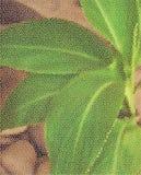 Grandes folhas no fundo das pedras Filtragem sob a forma de uma malha Foto de Stock Royalty Free