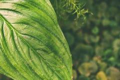 Grandes folhas tropicais verdes fundo, textura À moda matizado eco-amigável imagem de stock royalty free