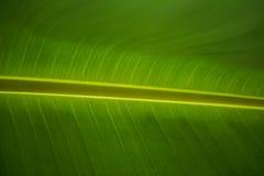 Grandes folhas verdes, fundo Fotos de Stock