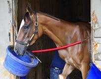 Grandes fotos da corrida de cavalos por Fleetphoto imagem de stock royalty free
