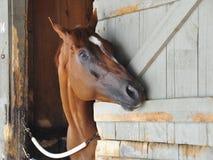 Grandes fotos de la carrera de caballos por Fleetphoto imágenes de archivo libres de regalías
