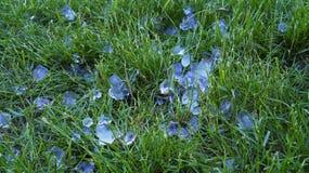 Grandes mentiras da saraiva na grama verde fotografia de stock