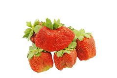 Grandes morangos aromáticas suculentas doces prontas para ser comido Fotografia de Stock Royalty Free