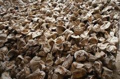 Grandes mussls Fotografia de Stock