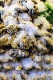 Grandes ostras pacíficas Fotografia de Stock