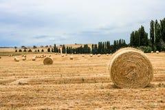 Grandes pacotes de feno redondos no prado Imagens de Stock Royalty Free