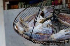 Grandes peixes secados Imagens de Stock Royalty Free