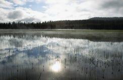 Grandes pelícanos blancos que nadan en el lago elk Foto de archivo
