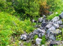 Grandes pierres de rochers de granit sur l'herbe verte Image stock