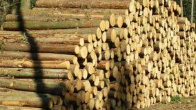 Grandes piles en bois des troncs d'arbre coupés, rondins ronds Les forêts impeccables ont infesté et ont attaqué par le scarabée  banque de vidéos