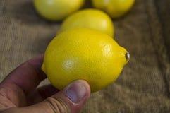 Grandes pinturas de mirada del limón para las ensaladas y las salsas en la cocina, imágenes orgánicas naturales del limón de la t Imagenes de archivo