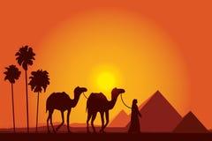 Grandes pirámides de Egipto con la caravana del camello en fondo de la puesta del sol Fotos de archivo