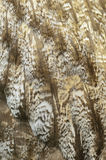 Grandes plumas de Grey Owl Fotografía de archivo libre de regalías
