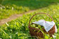 Grandes pommes mûres vertes dans un panier en osier à la fin de l'été au soleil dans l'herbe verte dans le jardin photos stock
