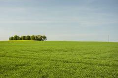 Grandes prado e bosque verdes foto de stock royalty free