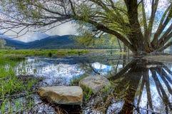 Grandes roches dans le secteur inondé par l'arbre image libre de droits