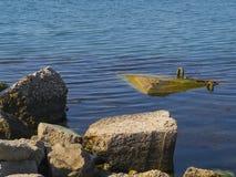 Grandes roches et algue en mer Photo libre de droits