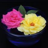 Grandes roses dans un vase bleu de verre sur un fond noir Photographie stock