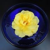 Grandes roses dans un vase bleu de verre sur un fond noir Photos stock