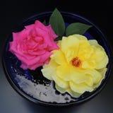 Grandes roses dans un vase bleu de verre sur un fond noir Photo stock