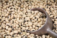 Grandes sementes Imagem de Stock Royalty Free