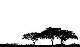 Grandes silhouettes d'arbre Photo stock