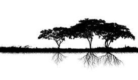 Grandes silhouettes d'arbre Photos stock