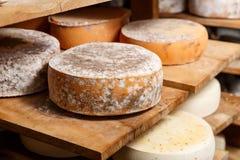 Grandes têtes jaunes de fromage de chèvre Image libre de droits