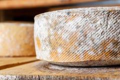 Grandes têtes jaunes de fromage de chèvre Photographie stock libre de droits