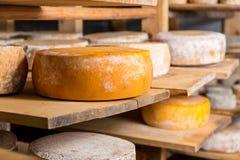 Grandes têtes jaunes de fromage de chèvre Photos libres de droits