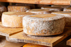 Grandes têtes jaunes de fromage de chèvre Photo libre de droits