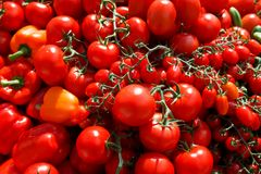 Grandes tomates Fotos de Stock Royalty Free