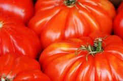 Grandes tomates do tamanho Foto de Stock