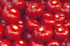 Grandes tomates mûres rouges fraîches organiques sur le marché le jour ensoleillé Photographie stock