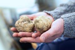 Grandes truffes blanches sur la main Photographie stock libre de droits