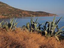 Grandes usines de cactus sur Cliff Overlooking Bay photographie stock libre de droits