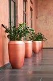 Grandes vasos foto de stock royalty free