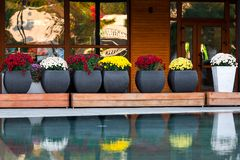 Grandes vasos de flores com flores coloridos fotografia de stock royalty free