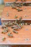 Grandes vespas de papel comuns imagem de stock royalty free