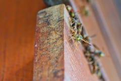 Grandes vespas de papel comuns foto de stock