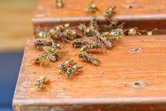 Grandes vespas de papel comuns imagem de stock