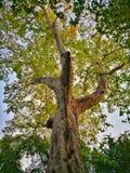 Grandeur de la forêt photo stock
