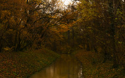 A grandeza do outono Foto de Stock