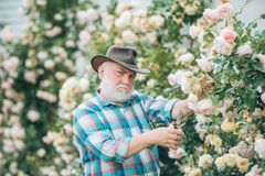 Grandfather in beautiful garden. Concept of a retirement age. Senior gardener. Portrait of grandfather while working in. Flowers garden. Spring and hobbies stock photography