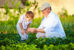 Grandfather explains grandson the nature of plant growth Royalty Free Stock Image