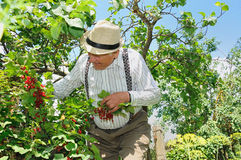 Grandfather in the garden Stock Image