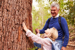 Grandfather and granddaughter admiring a tree in a forest Stock Image