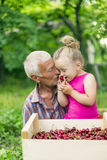 Grandfather with the granddaughter eating cherries Royalty Free Stock Photos