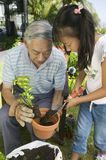 Grandfather And Granddaughter Gardening Together Royalty Free Stock Images