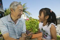 Grandfather And Granddaughter Gardening Together Stock Photo